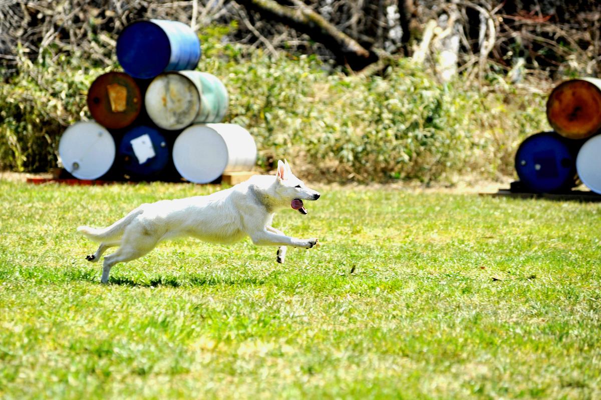 愛犬のしつけ・マナーに関しては駿東愛犬訓練所